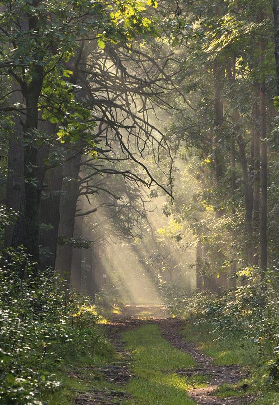 Skrajem puszczy - wycieczka po Kampinoskim Parku Narodowym